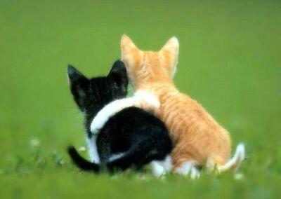 Law-of-Friendship.jpg