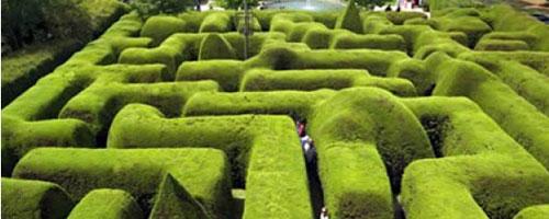 ashcombe_maze