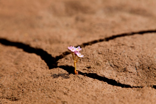 A macro shot of a small flower growing out of a crack in dry earth.